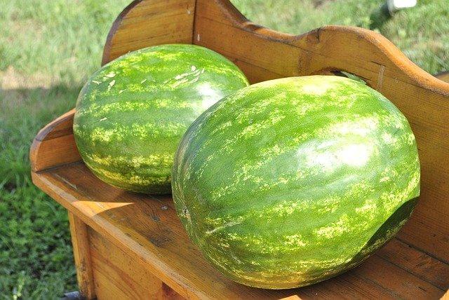 melouny na lavici