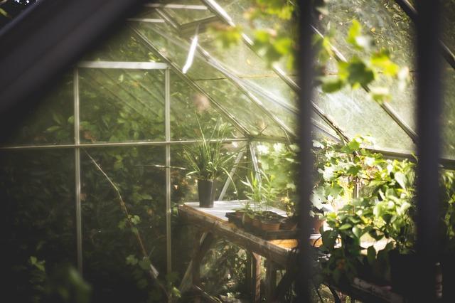 krása skleníku