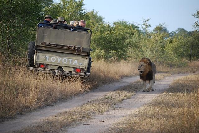 lev na cestě