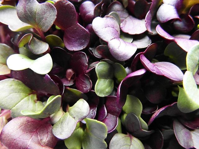Klíčení semínek láká stále více lidí