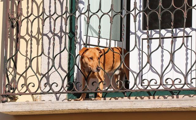 pes na balkoně